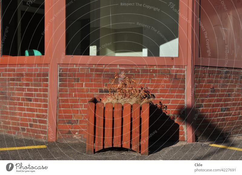 Straßenansicht eines verlassenen Büros Fenster Blumenschmuck Blumenkübel welk verwelkt Fassade lockdown aufgegeben Feierabend Abendlicht Schatten Backstein