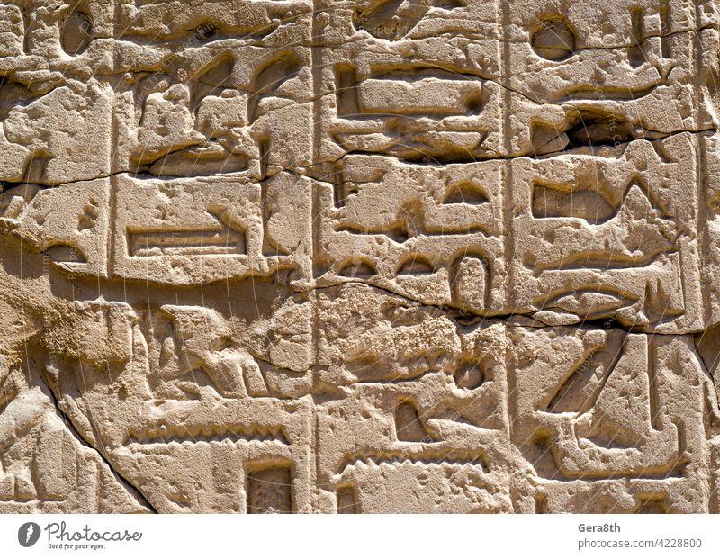 Altägyptische Hieroglyphen an der Wand in Luxor in Ägypten Afrika Ägypter Ägyptische Hieroglyphen antik altes Alphabet alte Buchstaben Architektur authentisch