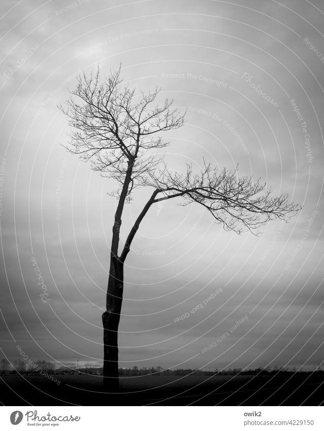 Demutsgeste Baum Zweige u. Äste stehen grau Wachstum Außenaufnahme Menschenleer Holz Natur Umwelt Nebel diffus schemenhaft halbdunkel ruhig Totale Low Key