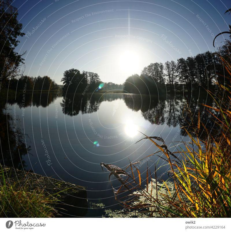 Blendwerk See Seeufer Teich Insel Röhricht Sträucher Gras Schönes Wetter Luft Wasser Wolkenloser Himmel Horizont Pflanze Landschaft Natur Umwelt leuchten