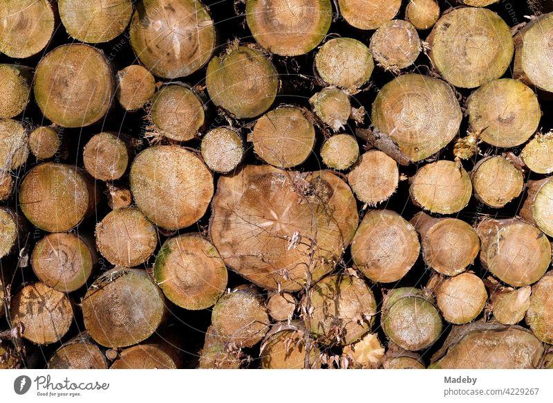 Holzstapel mit zersägten Baumstämmen nach Forstarbeiten in Oerlinghausen bei Bielefeld im Teutoburger Wald in Ostwestfalen-Lippe Stamm Baumstamm Rund Kreis