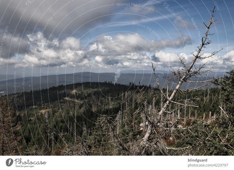 Blick Richtung Böhmen Wald Waldsterben Landschaft Baum Natur Umwelt Außenaufnahme Baumstamm Holz Forstwirtschaft Menschenleer Klimawandel Umweltschutz Totholz