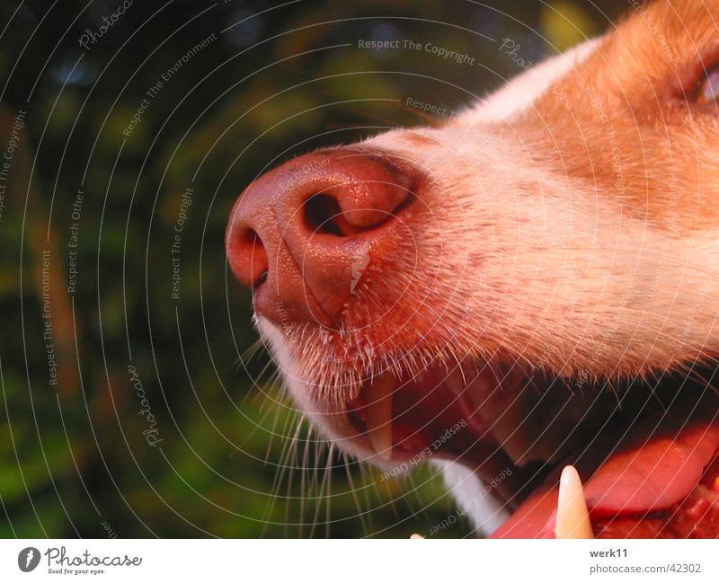 ...den richtigen Riecher haben! Hund Nase Schnauze Detailaufnahme