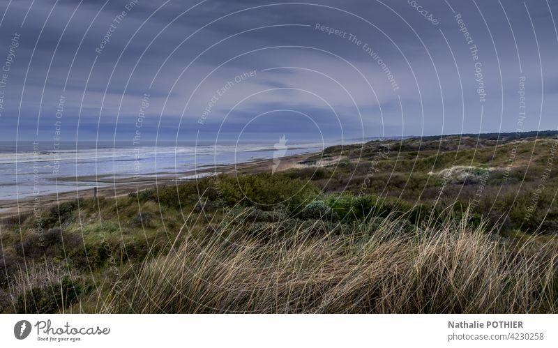 Dünen an der Opalküste in Frankreich Dunes Küste MEER Meer Ufer Küstenlinie Himmel Gras Wildkräuter Natur Meeresufer Landschaft Meereslandschaft malerisch