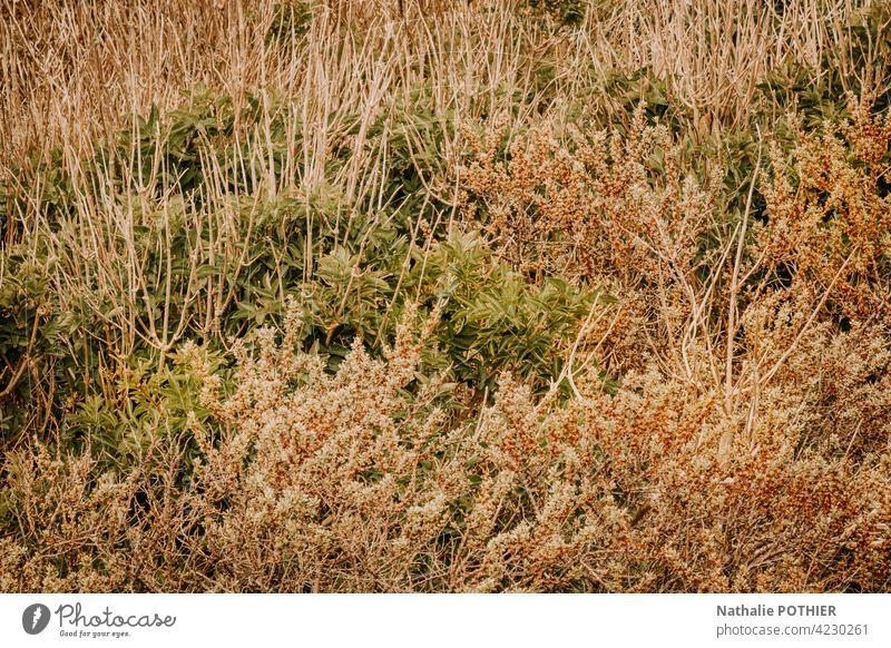 Wilde Gräser in den Dünen Gras wild Natur Wiese Umwelt Farbfoto Wildpflanze Sommer Außenaufnahme Pflanze natürlich Menschenleer Tag Grünpflanze Dunes