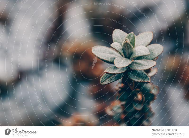 Grünpflanze in der Düne Pflanzendüne platte grün Natur Farbfoto Umwelt Außenaufnahme Gras Menschenleer Tag Dünengras verschwommener Hintergrund
