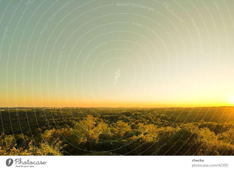 dusk Sonne grün Wald Landschaft Verlauf