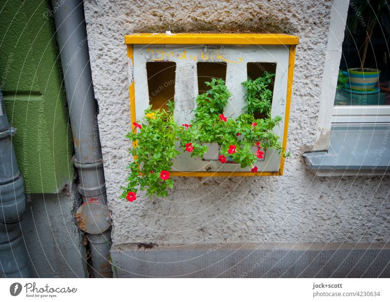 Blumen automatisch sprechen lassen Berlin Kaugummiautomat Streetart Blühend Wachstum verschönern gestalten Idee Straßenkunst Weitwinkel Kreativität