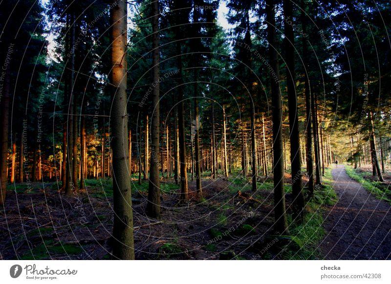 Black Forest Baum Wald Berge u. Gebirge Schwarzwald Abendsonne