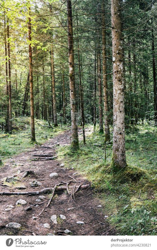 Wald mit Weg im Soča-Tal VII Starke Tiefenschärfe Lichterscheinung Kontrast Schatten Textfreiraum Mitte Textfreiraum unten Textfreiraum rechts Textfreiraum oben
