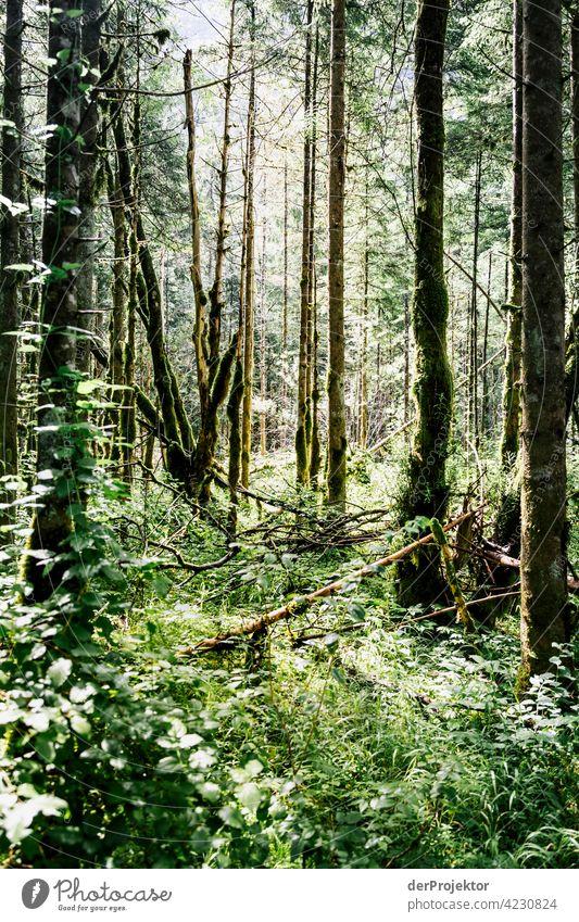 Wald im Soča-Tal VIII Starke Tiefenschärfe Lichterscheinung Kontrast Schatten Textfreiraum Mitte Textfreiraum unten Textfreiraum rechts Textfreiraum oben
