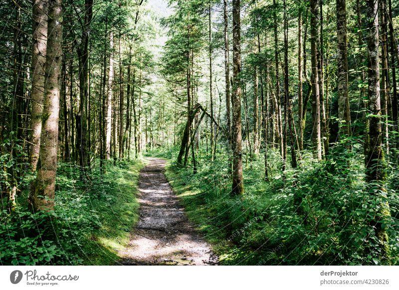 Wald mit Weg im Soča-Tal VI Starke Tiefenschärfe Lichterscheinung Kontrast Schatten Textfreiraum Mitte Textfreiraum unten Textfreiraum rechts Textfreiraum oben
