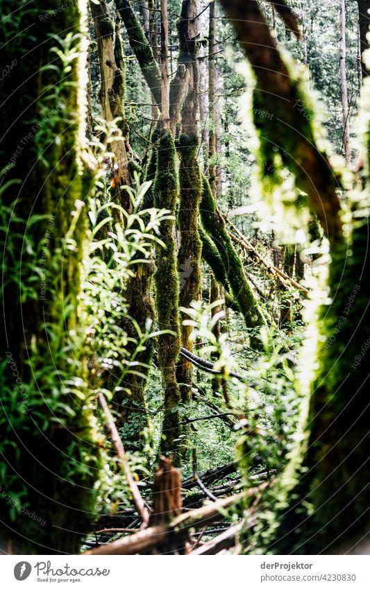 Wald im Soča-Tal V Starke Tiefenschärfe Lichterscheinung Kontrast Schatten Textfreiraum Mitte Textfreiraum unten Textfreiraum rechts Textfreiraum oben