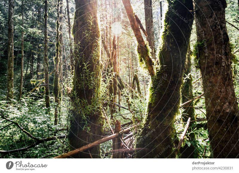 Wald im Soča-Tal IV Starke Tiefenschärfe Lichterscheinung Kontrast Schatten Textfreiraum Mitte Textfreiraum unten Textfreiraum rechts Textfreiraum oben