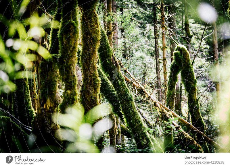 Wald im Soča-Tal III Starke Tiefenschärfe Lichterscheinung Kontrast Schatten Textfreiraum Mitte Textfreiraum unten Textfreiraum rechts Textfreiraum oben