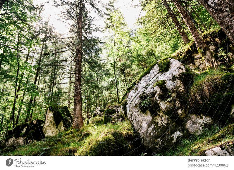 Wald im Soča-Tal II Starke Tiefenschärfe Lichterscheinung Kontrast Schatten Textfreiraum Mitte Textfreiraum unten Textfreiraum rechts Textfreiraum oben