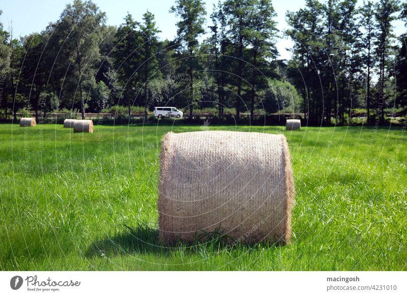 Heurolle auf dem Feld Rundballen Heuballen Agrarkultur Landwirtschaft Sommer Außenaufnahme Stroh Ernte Wiese Bäume Strohballen menschenleer niemand Ackerbau