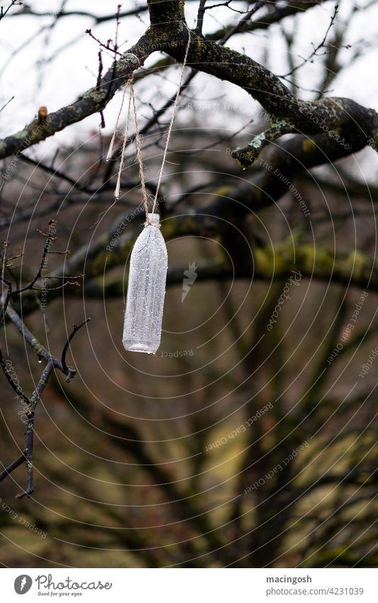 Leere Plastikflasche an einem Baum hängend Natur Umweltverschmutzung Farbfoto Plastikmüll menschenleer niemand Recycling Umweltschutz Insektenfalle