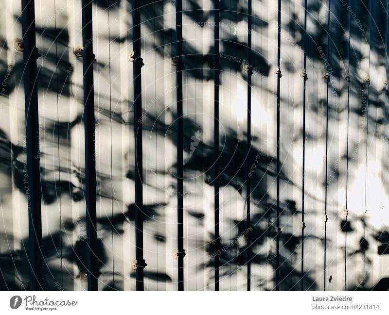 Baum Schatten auf dem Zaun Baumschatten Schattenspiel Zäune Licht Kontrast Sonnenlicht Strukturen & Formen Silhouette Muster abstrakt Außenaufnahme Fassade