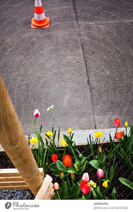 Straßenbegleitgrün anpflanzung asphalt ast baum baumscheibe erholung erwachen frühblüher frühjahr frühling frühlingserwachen garten kleingarten knospe