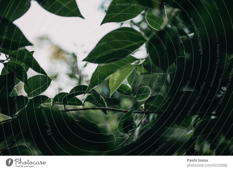Grüne Blätter gegen den Himmel grün Pflanze Grünpflanze Garten Laubwerk Natur organisch botanisch Umwelt Botanik natürlich Flora Blatt Ökologie Hintergrund