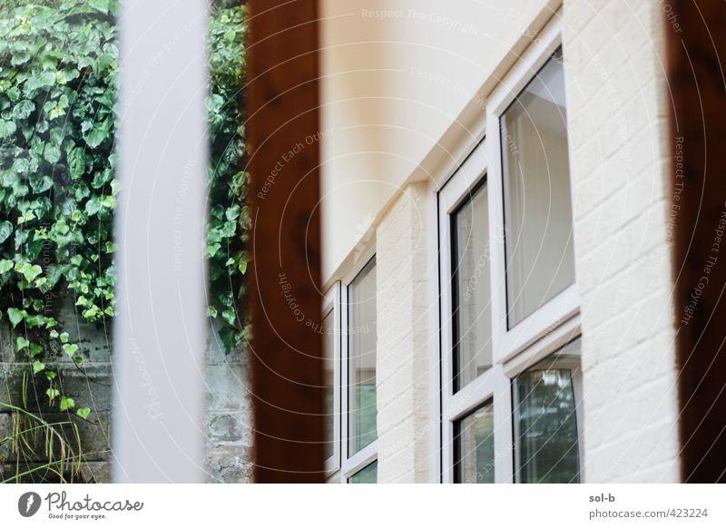 Wintergarten Lifestyle Häusliches Leben Haus Garten Innenarchitektur Spiegel Raum Pflanze Sträucher Mauer Wand Fenster ästhetisch elegant frisch Gesundheit