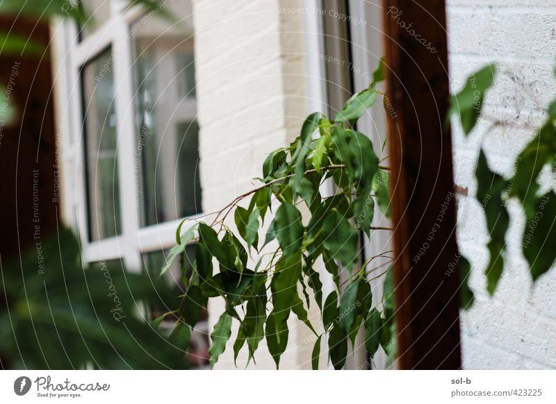 Inside Out Lifestyle Wellness harmonisch Wohlgefühl Häusliches Leben Innenarchitektur Spiegel Pflanze Topfpflanze Mauer Wand Fenster frisch Gesundheit natürlich