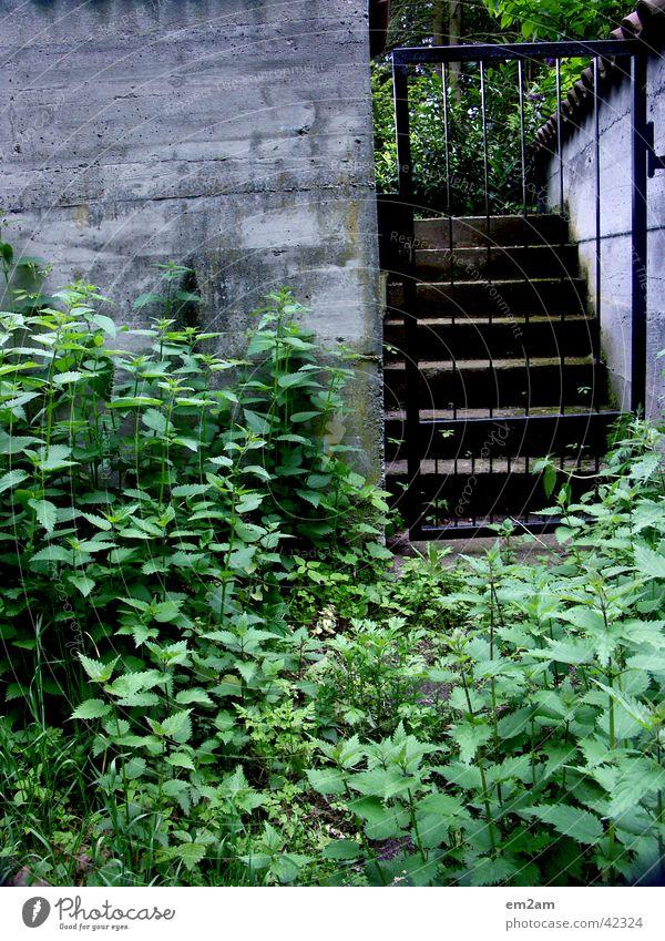Übergang Gitter Durchgang Eingang grün Beton Mauer Grenze Dreieck Garten verwuchert Treppe Tor Pflanze