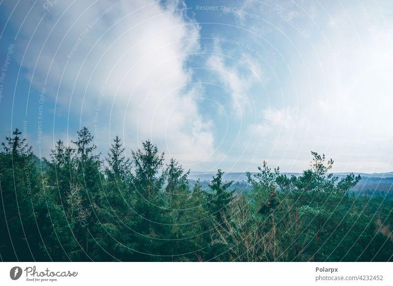Baumkronen in einem nebligen Wald geheimnisvoll dunkel Frühling Fee Panorama Tal Sonne Schönheit Ansicht Mysterium Hintergrund majestätisch blau Saison
