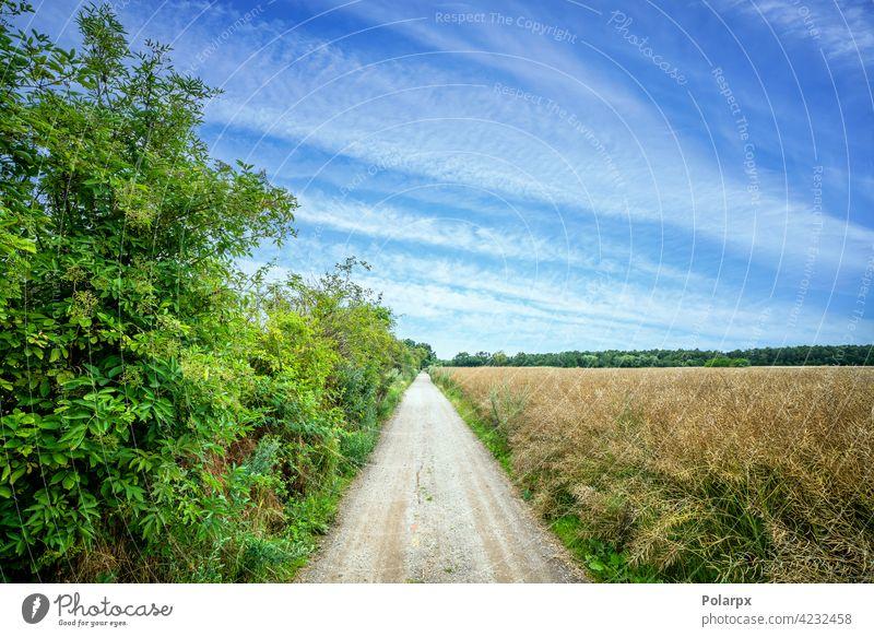 Ländlicher Weg mit grünem Busch und Feldern Fotografie Pfütze nass Transport Golfloch wüst offen Schönheit Szene Bahn Tag Sonnenuntergang Wald wild rau PKW