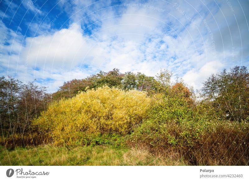 Bunte Naturszene in einer Wildnisumgebung Nationalpark Baumstamm Wolke - Himmel Wurmfarn Buschland Schweden Vitalität Wurzel unkultiviert Reiseziele