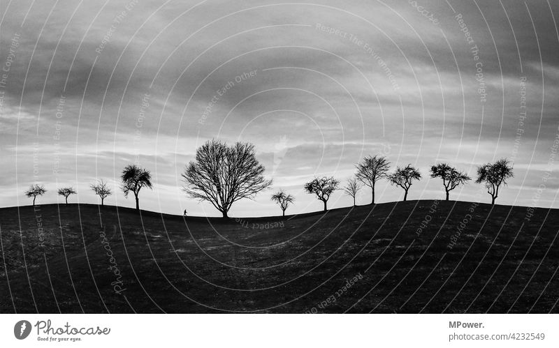 allein unter 12 fineart schwaz-weiß Bäume Hügel kahle Bäume Mensch wandern trist düster geschwungen klein Horizont Scherenschnitt Wolken Winter Himmel