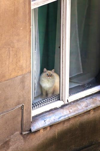 Katze im Fenster altbau außen fassade fenster fensterplatz haus hinterhaus hinterhof innenhof innenstadt katze mauer mehrfamilienhaus menschenleer mietshaus
