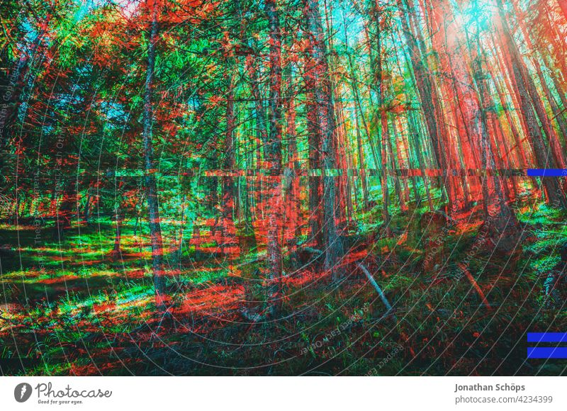 Nadelbäume im Wald mit Glitch Effekt Baumstamm Nadelwald Natur Landschaft Außenaufnahme Menschenleer Umwelt Farbfoto Forstwirtschaft Umweltschutz nachhaltig