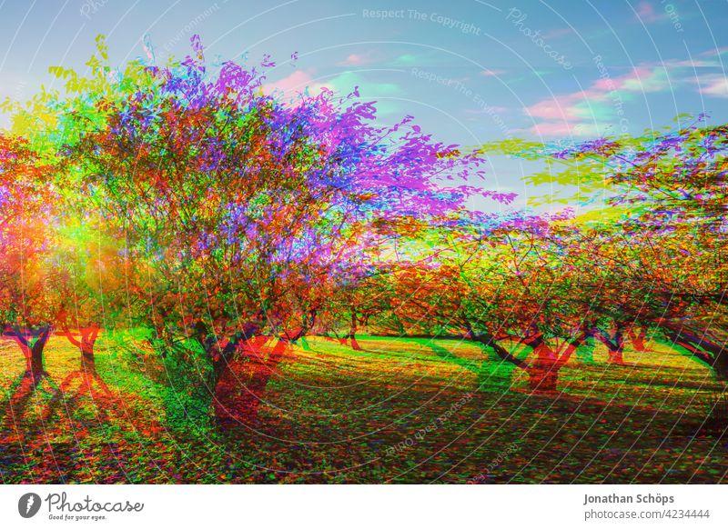 Baum Plantage Glitch Effekt Natur Landschaft Außenaufnahme Menschenleer Umwelt Farbfoto Umweltschutz nachhaltig glitch effect Anaglyph fehler bunt hintergrund