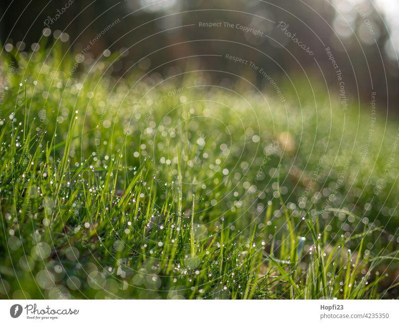 Nasses Gras Wiese grün Sommer Natur Umwelt Farbfoto Landschaft Menschenleer Tag Pflanze natürlich Wildpflanze Frühling Wasser Wassertropfen nass feucht