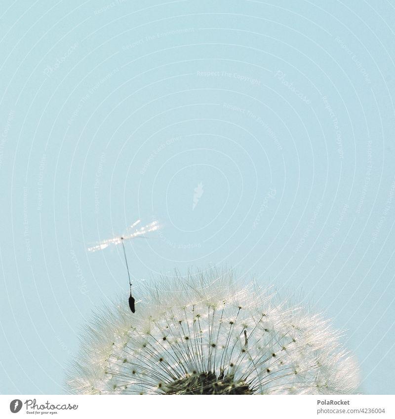 #A0# Pusteblume als Startschuss für Startups pusteblumen Pusteblumefähnchen Wind Natur naturverbunden nachhaltig Nachhaltigkeit Klima Klimawandel Karriere