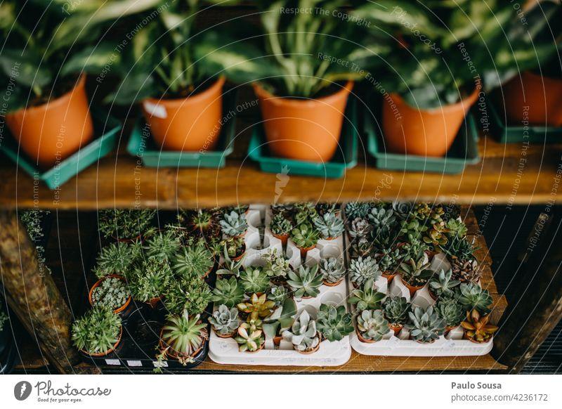 Topfpflanzen zu verkaufen Kleinunternehmen Wirtschaft eingetopft grün Botanik Natur Pflanze Dekoration & Verzierung natürlich Zimmerpflanze Blumenhändler