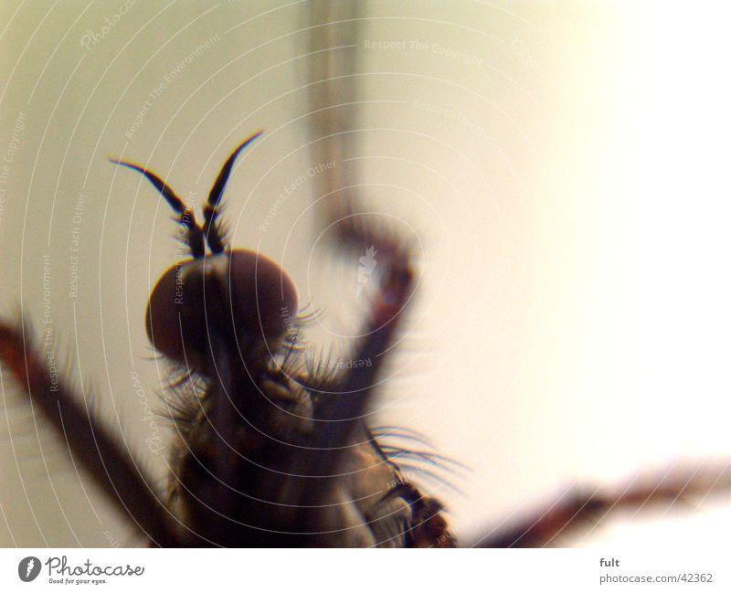 insekt Insekt Unschärfe Leben Makroaufnahme live Nahaufnahme marco insect legs eyes