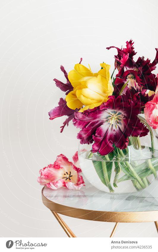Strauß Papagei Stil Tulpen Blume Papageien-Tulpe Blumenstrauß Vase Blumenkollektionen Frühlingsblüte frisch präsentieren Geschenk Anlass Feiertag festlich
