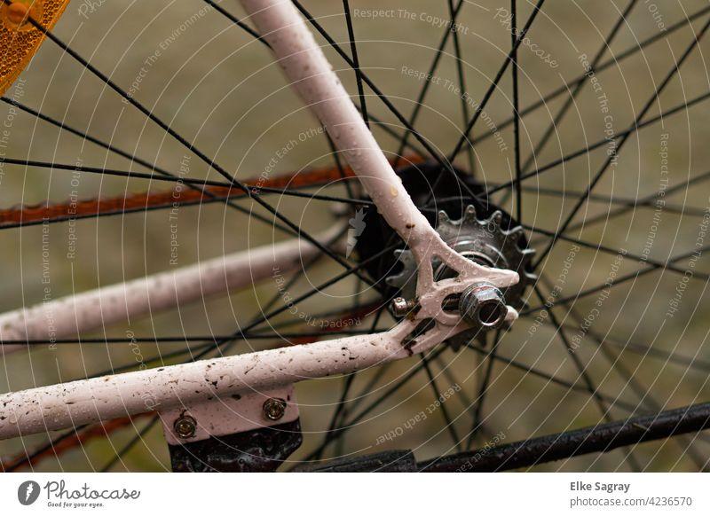 ....Radfahren ist Zeitlos #fahrad Außenaufnahme Detailaufnahme Farbaufnahme Farbfoto Straße Hinterrad Freude Freizeit & Hobby