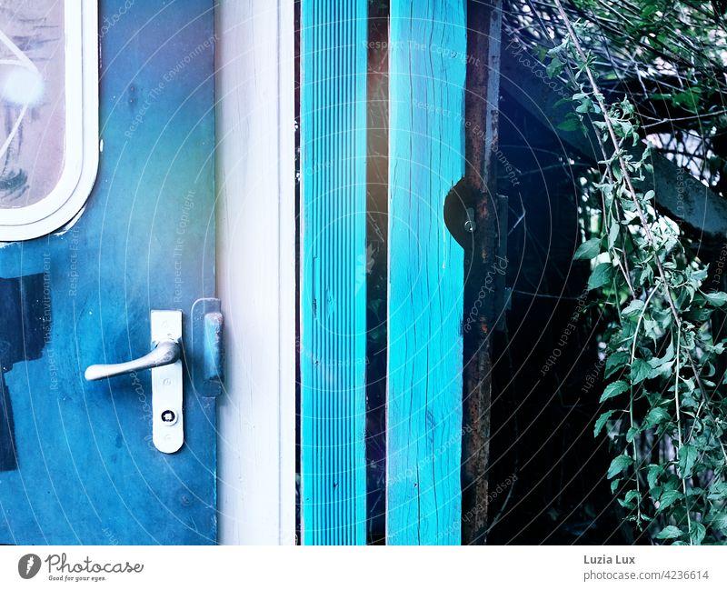 Leuchtend blau: eine alte Waggontür längst zweckentfremdet, umwachsen im Sonnenlicht Blau leuchtend türkis Licht Rost altmodisch vergänglich schön
