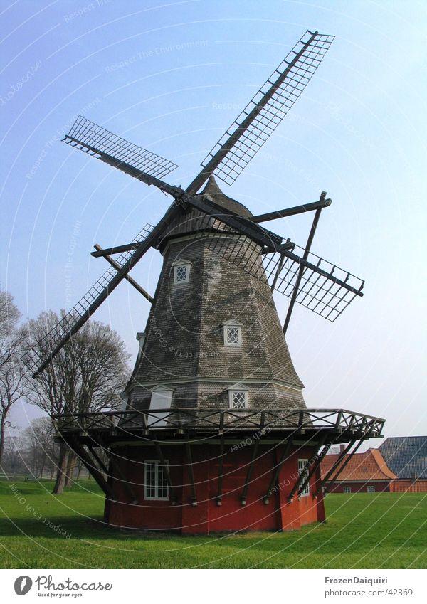 Windmühle alt Baum Wiese Holz Kunst Europa historisch Dänemark Sightseeing Sehenswürdigkeit Mehl zerkleinern Holzmehl Kopenhagen
