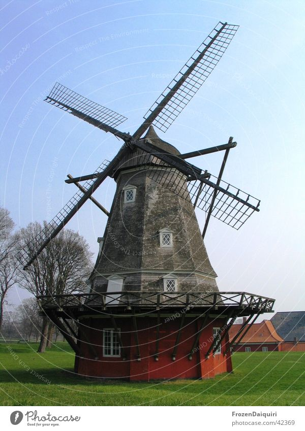 Windmühle alt Baum Wiese Holz Kunst Wind Europa historisch Dänemark Sightseeing Sehenswürdigkeit Mehl zerkleinern Holzmehl Kopenhagen
