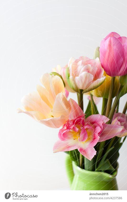 rosefarbene und helle Tulpen am rechten Bildrand in einer grünen Kanne Frühling Blumen Strauß rosa gelb Blüte Blumenstrauß Natur Geschenk Liebe Muttertag