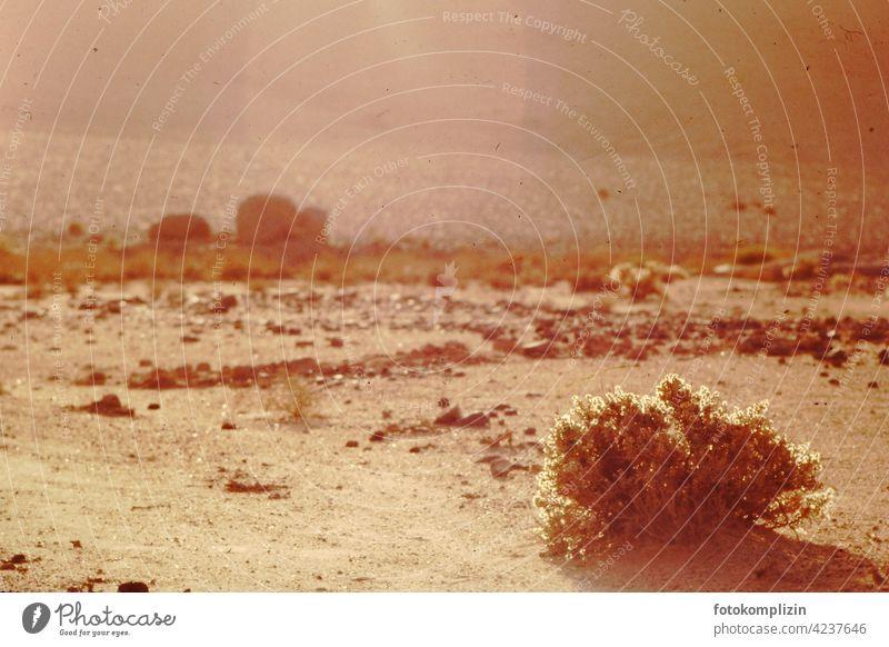 leuchtender Dornenbusch in der Sahara-Wüste wüst Wüstensand Sand Wüstenlandschaft Wüstenpiste Ferien & Urlaub & Reisen Busch Steinwüste Hitze Sonne heiß