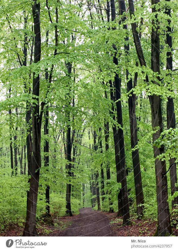 Frühling im Wald Landschaft Natur Umwelt Baum Sträucher Idylle Spaziergang Spazierweg Wege & Pfade Forstwirtschaft Jahreszeiten Pflanze natürlich Erholung