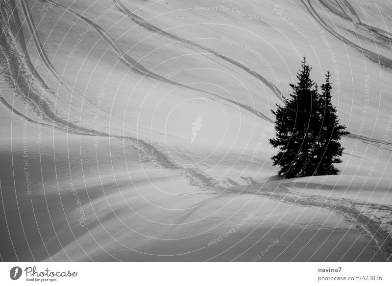 Winterwache Natur Pflanze grün schön weiß Landschaft ruhig Ferne schwarz Schnee elegant Idylle Skifahren Tanne Reinheit