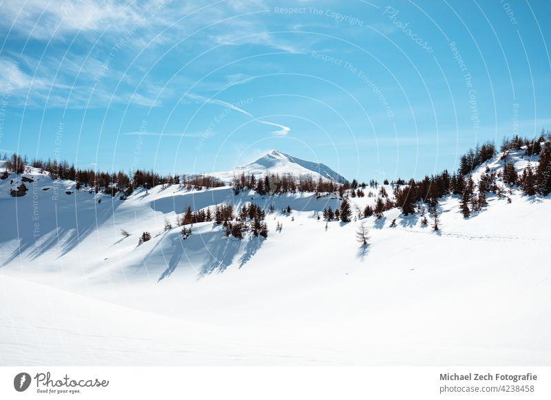 Winterwanderung in den Schweizer Alpen bei Feldis, Kanton Graubünden Landschaft blau Natur Fichte Wald Schnee Weihnachten Himmel Berge u. Gebirge Tanne reisen