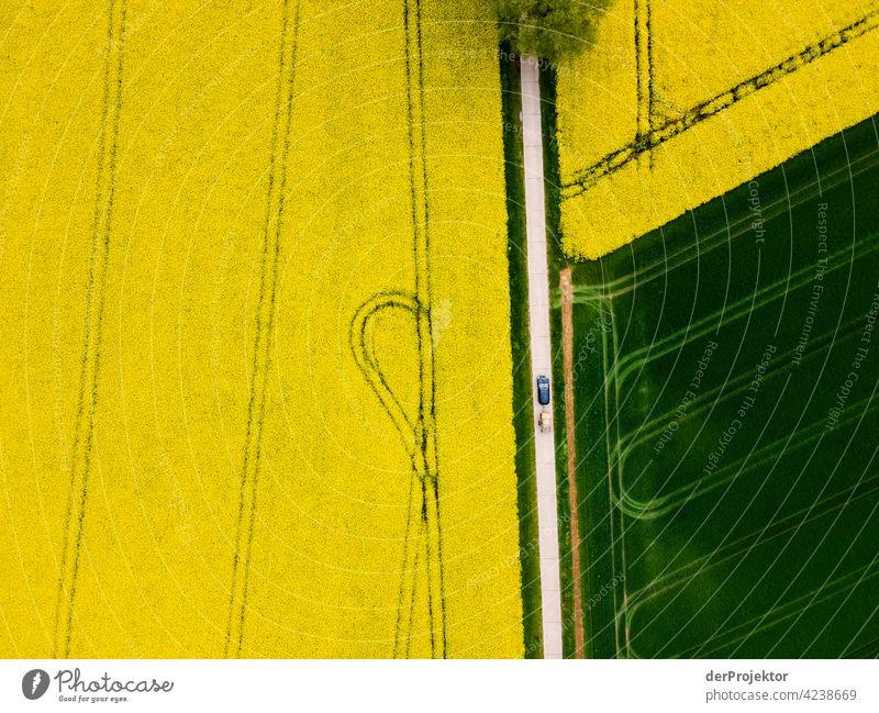 Rapsfeld in gelb mit Weg, Bäumen und Auto mit Anhänger Luftbild Feld Freiheit Abenteuer Ausflug Tourismus Ferien & Urlaub & Reisen Lebensfreude Naturwunder